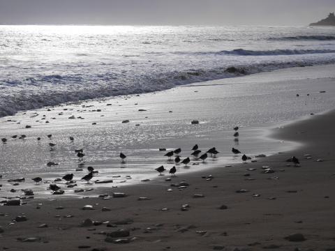 Le bord de mer